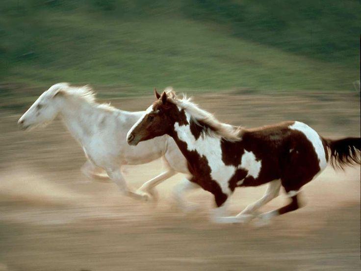 Run: Hors Wallpapers, Beautiful Horses, Running Horses, Wavy Hair, Mustangswild Hors, Hors Pictures, Animal Totems, Animal Wallpapers, Horses Wallpapers