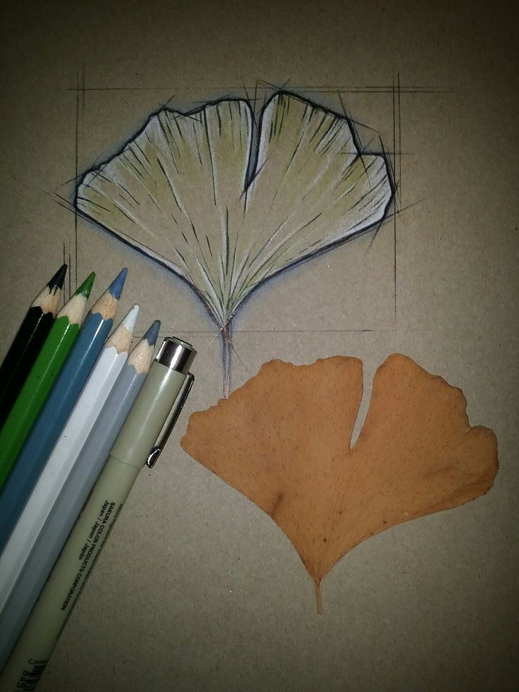 Gingko biloba... KOH-I-NOOR Mondeluz aquarell coloured pencils, black pen and SAKURA Pigma brush marker #ginkgo #leaf #geometric #tattoodesign