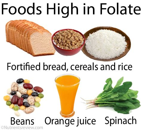 Foods High In Iron Vitamin B And Folic Acid