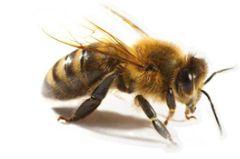 Parrainez une ruche pour sauver les abeilles. En contrepartie le produit de leur travail.