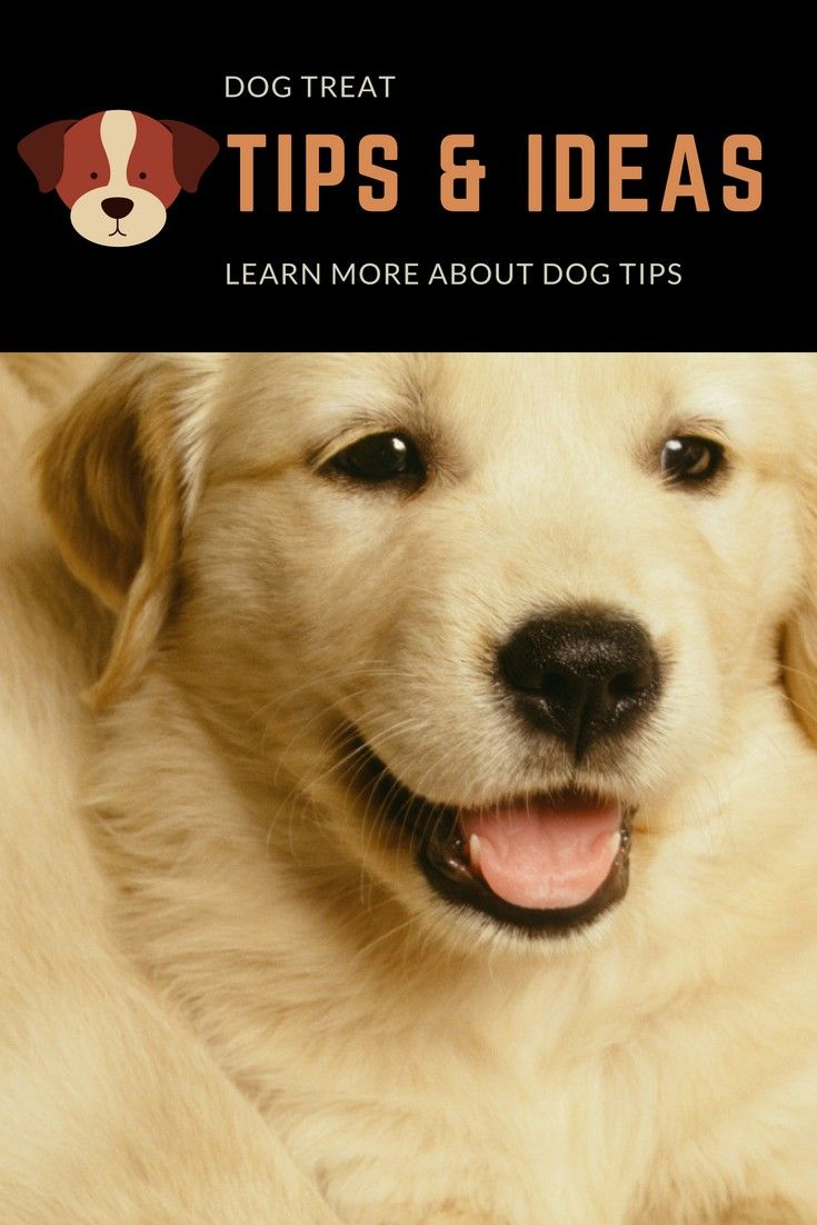 Dog Training How To Start An Easy And Fun Training Routine
