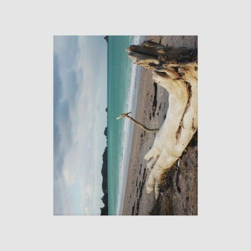 Beach Driftwood Photo Art Canvas Print Photo Art Canvas Art