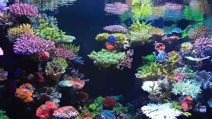 Saltwater Fish Tank Coral Google Search Salt Water Tank Pinterest Saltwater Fish Tanks