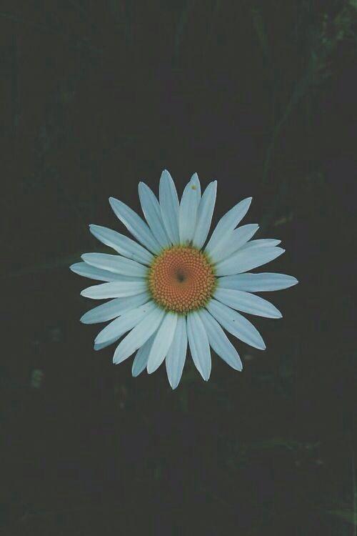 hipster daisy wallpaper - photo #19
