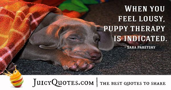 Quotes About Dogs - 38
