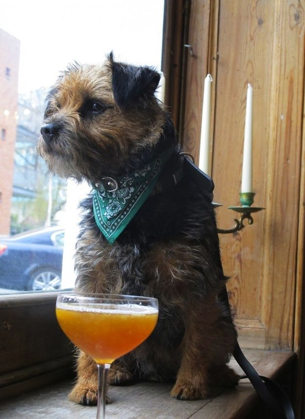 Even if you bought them something you know they'd like. | Definitive Proof That Dogs In Pubs Are The Best Thing Ever