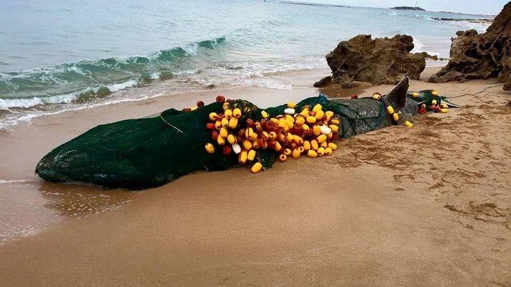 Ocean Defender Hawaii This Week In Spain This