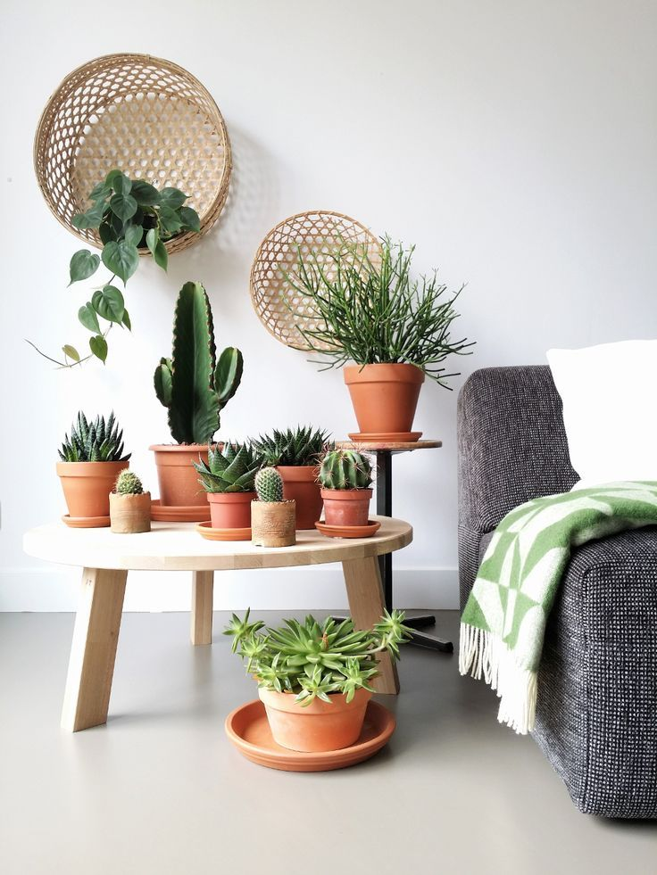 using a coffee table to place all your little succulents ...