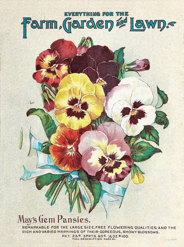 1904 May's Catalogue of Northern Grown Seeds, back cover