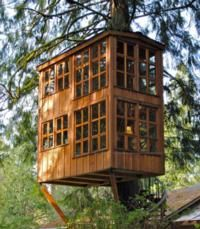 Animal Planet to Premiere TREEHOUSE MASTERS, 5/31: Dreams Houses, Spirals Stairca, Window, Trees Houses, Tree Houses, Treehouse, Backyard, Back Yard, Kid