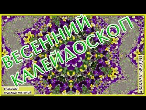 Калейдоскоп первых весенних цветов  Слайд   шоу  весенние цветы