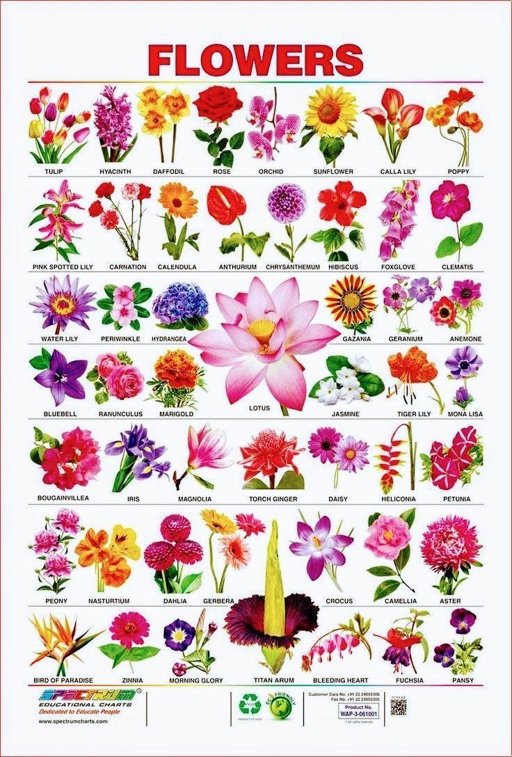 Notitle Namen Von Blumen Verschiedene Blumenarten Blumenzeichnung
