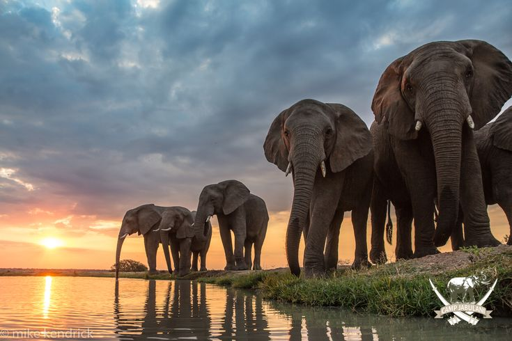 The promise of a new dawn is in sight #CampJabulani #AfricanSunset #southafrica #travel #elephants