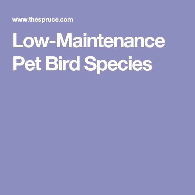 Low-Maintenance Pet Bird Species
