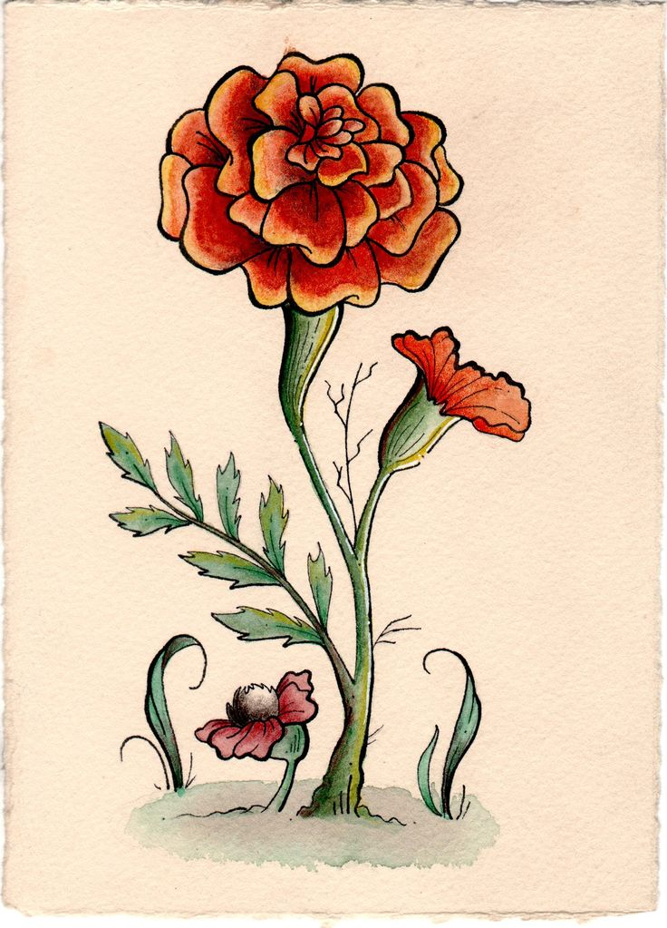 watercolor flower study~ Marigold by Victoria Marble