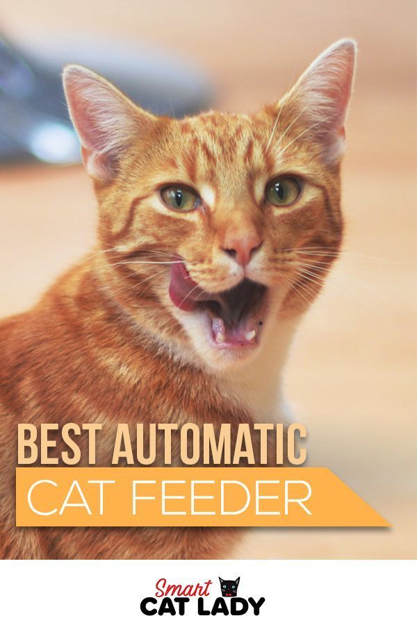 Automatic Cat Feeders Are A Great Way To Keep Your Cat Healthy And Happy.  Check Out Our Picks And Reviews Of The Best Automatic Cat Feeders You Can  Buy ...