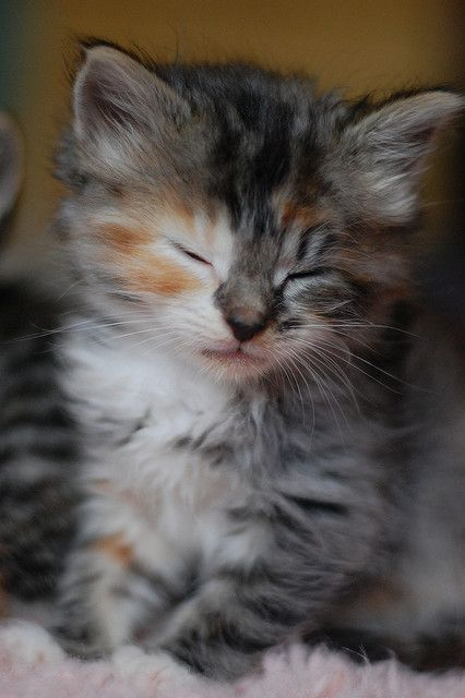 Oh!  Such a sweet little face!  ♥