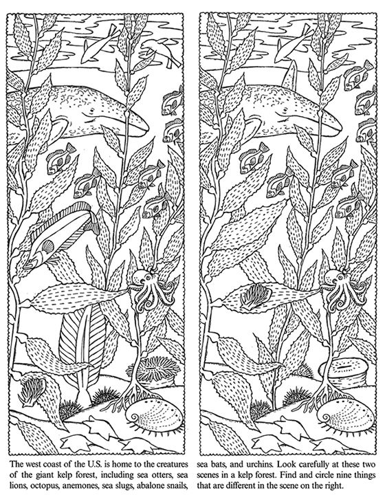 Welcome to Dover Publications Seashore Activity Book Spot the Difference
