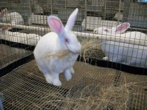 Commercial Rabbit Cage With Nest Rabbit Cage Rabbit