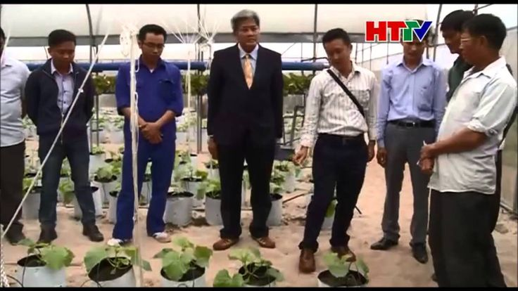 Chuyên gia Thái Lan tư vấn kỹ thuật trồng dưa lê, dưa lưới www thongthai...