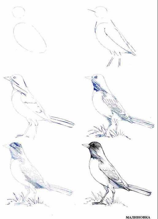 Иллюстрация 13 из 14 для Рисуем 50 птиц - Эймис, Д'Адамо | Лабиринт - книги. Источник: Спанч Боб