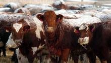 An Alberta meat processing plant that continued to churn out its product for more than three weeks after the discovery of a dangerous E. coli strain of bacteria early last month did not follow its own protocols for handling the outbreak.