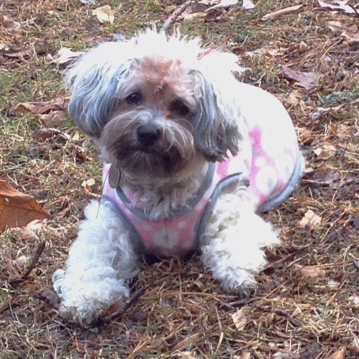 Fleece Dog Coat With Bias Tape Binding