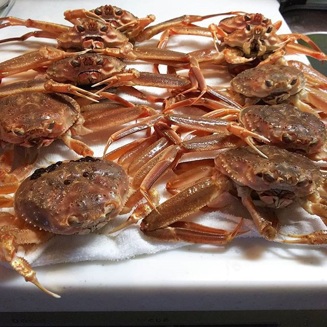 コウバコ蟹‼️ ついに我が家にやって来ました🎵 なかにはまだ足を動かしているのもいました🎵 ん~😵ごめんなさい🙇‼️ 自宅で茹でて食べるのが1番です✨  #東亜和裁#蟹 #こうばこがに #ゆでる #蟹解禁 #toawasai