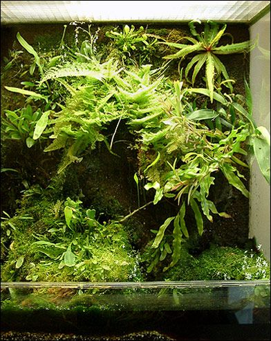 overview  vivarium - quadrangle