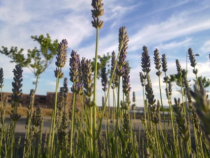 Labanda: Botica Natural, Apothecary