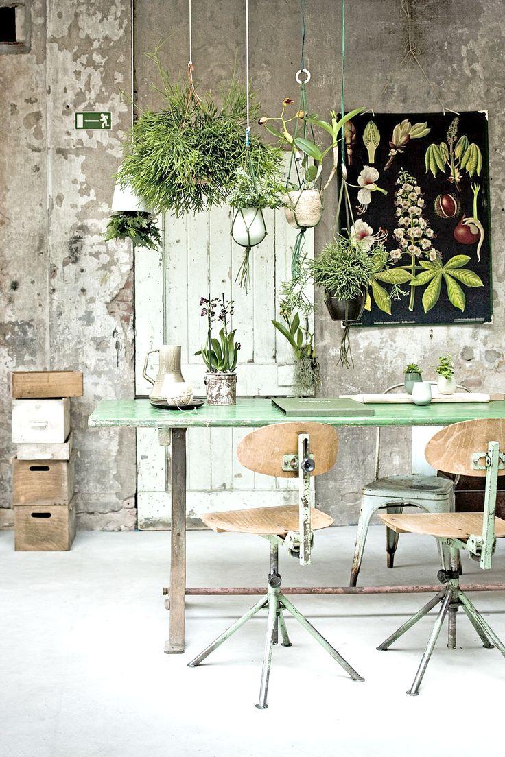 Wiszące rośliny domowe - naturalnie zielone dekoracje. Hanging houseplants - naturally green scenery home decor.