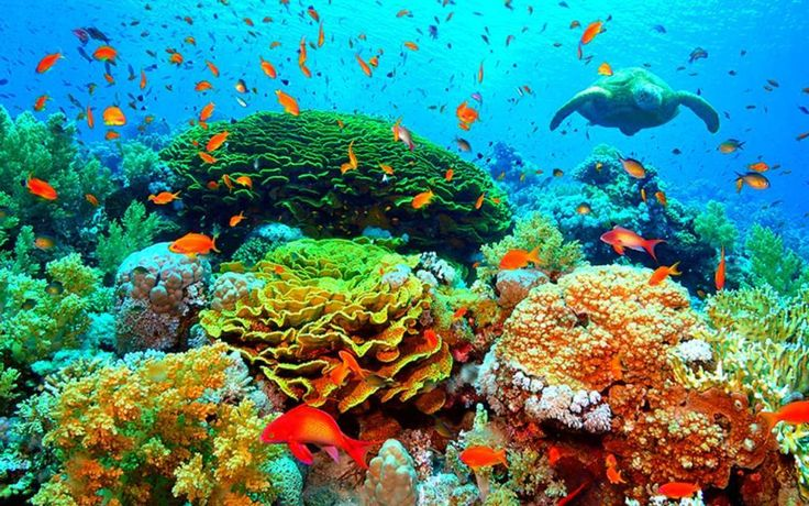 Stunning Coral Reef Photos | Robert ri'chard, Pictures and ...