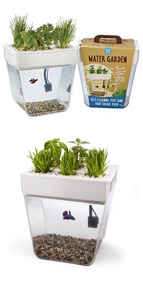 1000 images about kitchen tools on pinterest digital for Fish tank herb garden