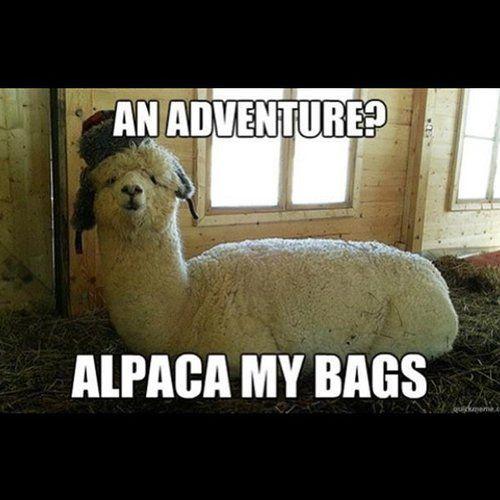 b9551f1be69fee648505753dba82731d so funny funny shit 33 best travel memes images on pinterest business travel, ha ha