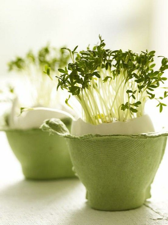 Sow seeds in egg shells. Watercress works perfect!
