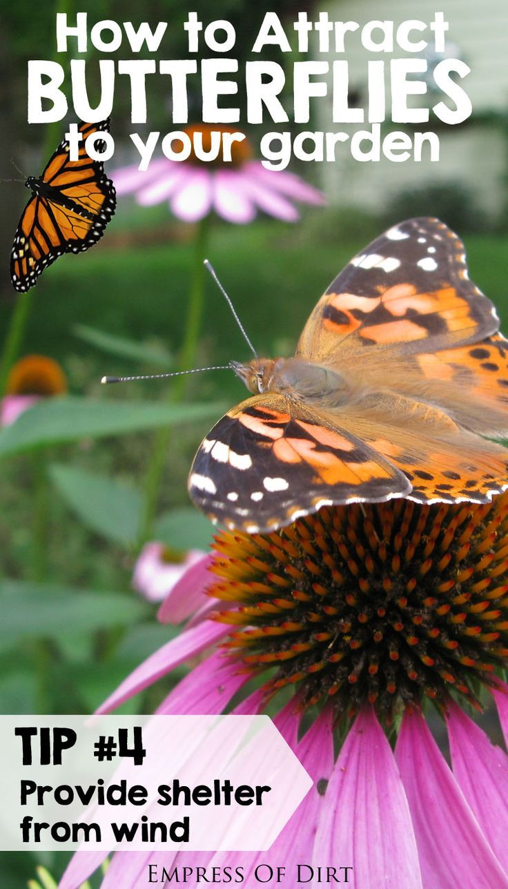 How to Attract Butterflies to Your Garden | Gardens, The o ...
