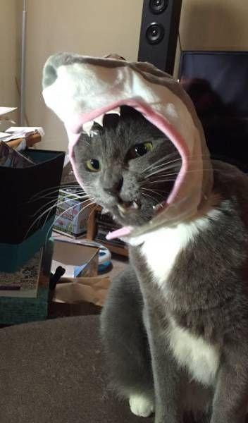 Funny Cat Pictures - 18 Pics | Funny Cat | DomPict.com