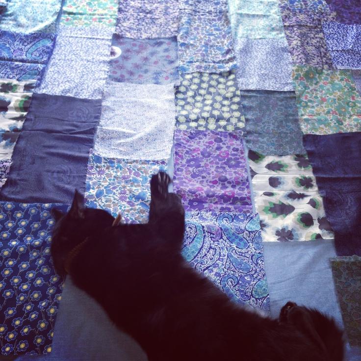 The beginnings of my quilt...plus cat