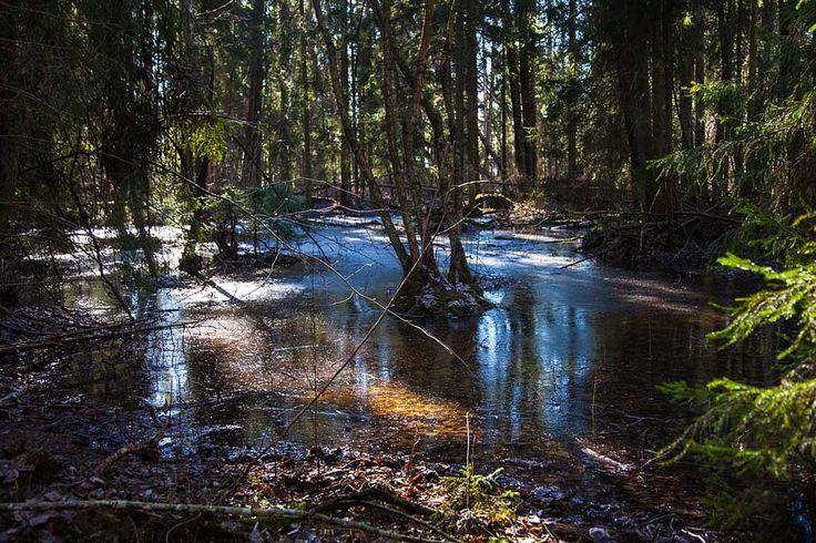 https://flic.kr/p/DE8C34 | In the woods, Karkali Nature Park