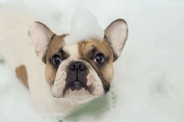 Bathing Your Puppy Step By Step Guide To Helping Pups Tolerate