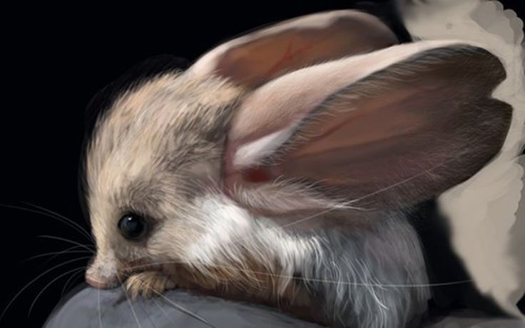 So I just stumbled upon the existence of the jerboa, a desert hopping rodent that looks like it's out of some sci-fi movie or fantasy world, and my mind has been blown. I mean, I'd have called it a kanga-rat, but what do I know? Click here to see yesterday's Daily Cute and check back [...]