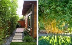 Cerco de crecimiento rapido - Cerco de cañas de bambu vivo