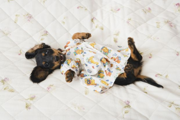 National Puppy Day: 21 puppies that are feeling very positive about today