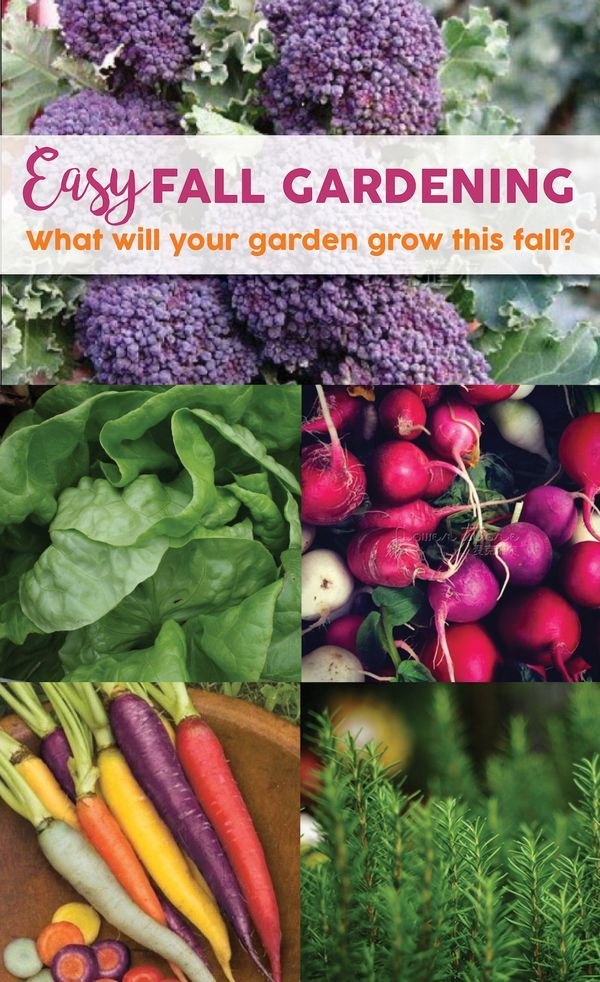 160 best Gardening in the Fall images on Pinterest | Gardening, Fall ...