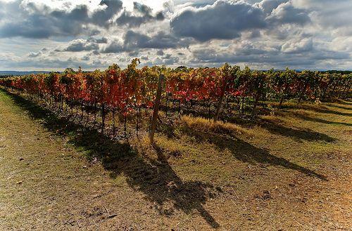 #vino #verdicchio