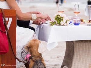 Hochzeit auf Rügen zu zweit am Strand mit Hund