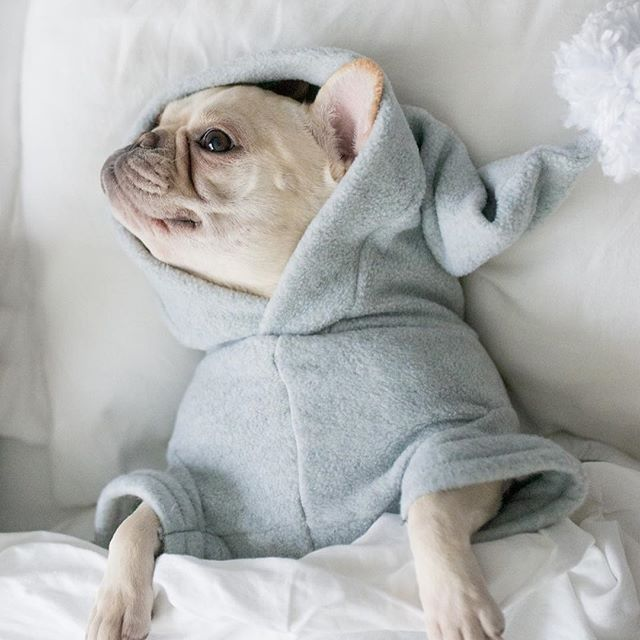 lazy bulldog puppies - photo #10