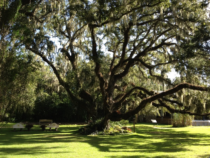 Old Confederate Oaktree At Sugar Mill Gardens In Port Orange Florida Favorite Places Spaces