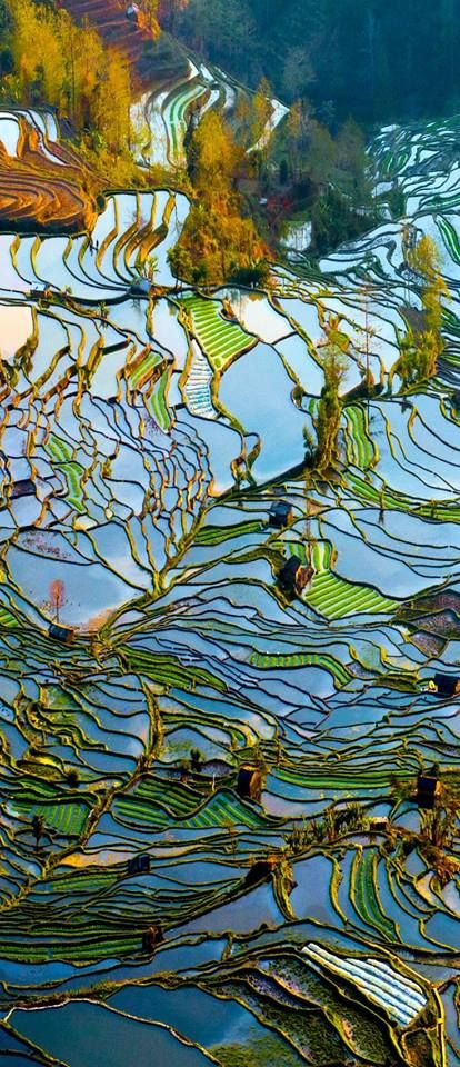 Terraced Rice Paddies - Looks like a stained glass window!