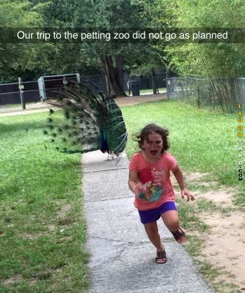 Our trip to the petting zoo